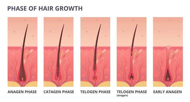 Лазерная эпиляция и циклы роста волос